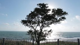 Lonely tree at the wind by the sea. Sunny day. Embankment.  stock video footage