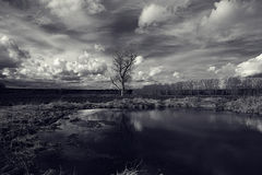 Lonely tree in the windy field Royalty Free Stock Photos