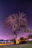 Lonely tree on the windy night Royalty Free Stock Photography