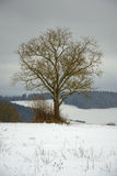 Lonely tree in winter country Royalty Free Stock Photos