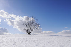 Lonely tree on winter field Royalty Free Stock Photography