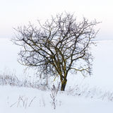 Lonely tree. Tree on the winter field Stock Photos