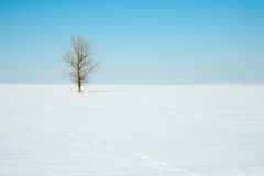 Lonely tree in winter field Stock Photo