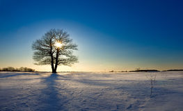 Lonely tree in winter field closes sun on decline Stock Photography