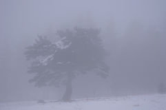 Lonely tree in winter fog Stock Images