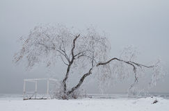 Lonely tree in winter. Lonely tree in ice on the winter Stock Photo