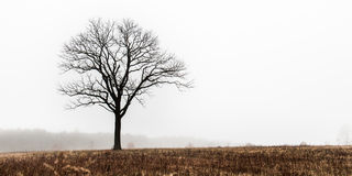 Lonely Tree in Winter Meadow Royalty Free Stock Images