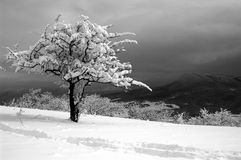 Lonely tree in the winter in mountains Stock Image