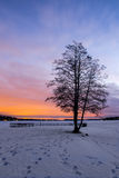Lonely tree at winter park in the sunset Stock Photography