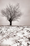 Lonely tree at winter snow Stock Photos
