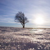 Lonely tree in winter Royalty Free Stock Images