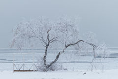 Lonely tree in winter. Lonely tree on the snow in winter Stock Photos