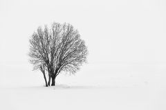 Lonely tree in winter time Royalty Free Stock Images