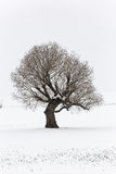 Lonely tree in winter time Stock Image