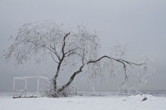 Lonely tree  in winter. Willow tree on the snow in winter Royalty Free Stock Photos