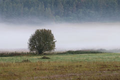 Lonely tree in the wisps of fog Royalty Free Stock Images