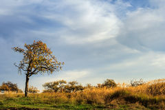 Lonely tree among withered grass in late autumn Stock Photos