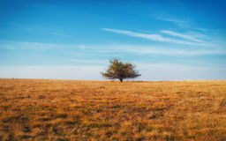 Lonely tree on yellow meadow an mountain landscape with clouds. Stock Images