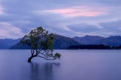 That Wanaka Tree, New Zealand stock photos