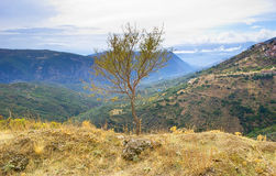 The lonely tree Royalty Free Stock Photos