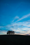 Lonely Trees. On the field on the hill Royalty Free Stock Images