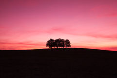 Free Lonely Trees Stock Photography - 11333742