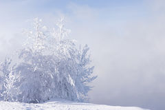 Lonely trees Stock Photography
