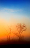 Lonely trees. At sunrise, composition in blue and orange Stock Image