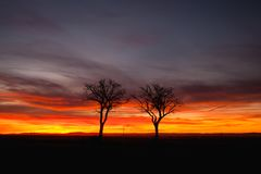 Lonely trees in dramatic sunset, Central Bohemian Upland, Czech. Silhouette of lonely trees in dramatic sunset, Central Bohemian Upland, Czech Republic royalty free stock photos