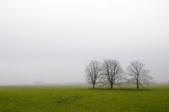 Lonely trees in the fog Royalty Free Stock Image