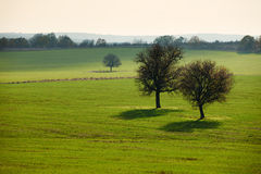 Lonely trees in green autumn field Stock Photo