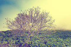 Lonely trees in the mountains at foggy morning time between rhododendron bushes. Stock Images