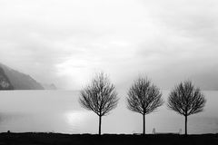 Lonely trees on the quiet lake side in winter,. Minimalistic landscape, Brienzersee. Switzerland Royalty Free Stock Photography