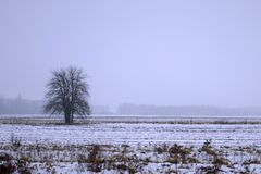 Lonely trees in the snow stock images