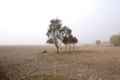 Lonely trees on vast field Royalty Free Stock Photos