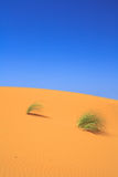 Lonely tufts of grass on sand dune Stock Photo