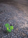 The Lonely Unwanted Flora Begins Life. In The Stone Ground Stock Photo