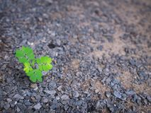 The Lonely Unwanted Flora. On The Stone Ground Stock Image