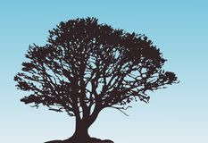 Lonely vector tree Royalty Free Stock Photo