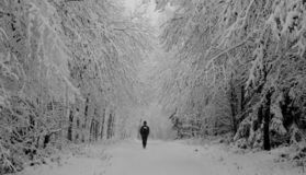 Lonely Walk In The Winter Forest Royalty Free Stock Photo