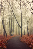 Lonely walkway in the autumn deserted park in foggy weather Stock Images