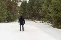 Lonely wanderer on the edge of winter forest Royalty Free Stock Image