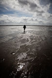 Lonely wanderer in the Wadden Sea Royalty Free Stock Images