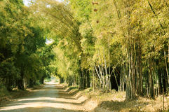 The lonely way. Bamboo forest in the north of Thailand and the lonely way Stock Photo