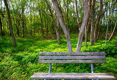 Lonely weathered bench at the jungle forest park Royalty Free Stock Photography