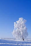 Lonely white frost covered tree against blue sky Stock Images