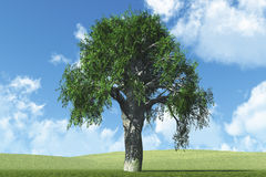 Lonely White Oak Royalty Free Stock Images