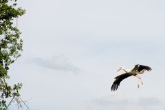 Lonely white stork in the sky Royalty Free Stock Photo