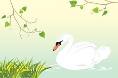 Lonely white swan swimming in a pond. Illustration Royalty Free Stock Images