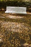 Lonely white wooden bench in old  park in autumn Royalty Free Stock Image